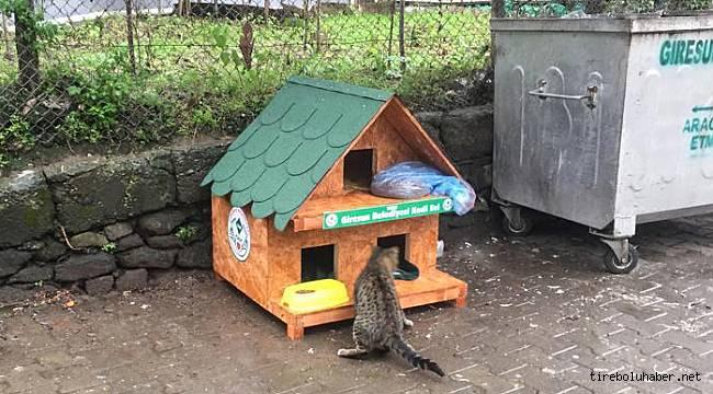 Giresun Belediyesi sokak hayvanlarını unutmadı