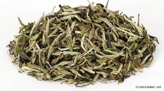 Beyaz çay hasadı başladı