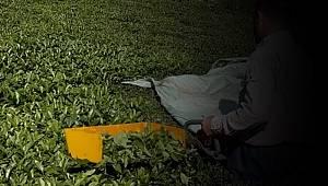 Motorlu çay toplama makineleri yasaklandı