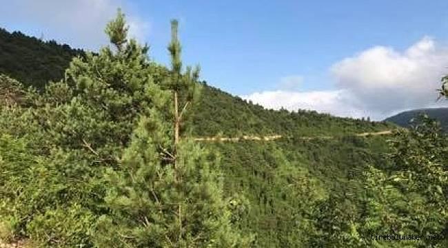 Tirebolu Hızırilyas tepesi Tabiat Parkı oldu